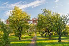 Garden in the city of St. Petersburg Stock Image