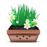 Garden clay pot and fresh grass with flowers Stock Images