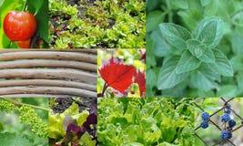 Garden collage Stock Photos