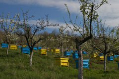 Garden with colorful beehives Stock Photography