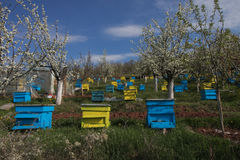 Garden with colorful beehives. In spring orchard royalty free stock images