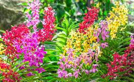 Garden with colorful orchids in spring sunshine royalty free stock photo