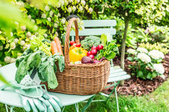 Garden - colorful spring vegetables in wicker basket Royalty Free Stock Photo
