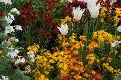 Garden 11. Colourful garden beds with an abundance of beautiful flowers Stock Image