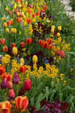 Garden 18. Colourful garden beds with an abundance of beautiful flowers Stock Photos