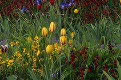 Garden 17. Colourful garden beds with an abundance of beautiful flowers Stock Photo