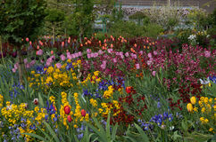 Garden 16. Colourful garden beds with an abundance of beautiful flowers Stock Photo