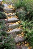 Old sandstone stairs and aromatic herbs covered with fallen leaves. Garden composition with old sandstone stairs and aromatic herbs covered with fallen leaves royalty free stock photos
