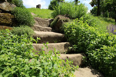 Garden composition with old sandstone stairs and aromatic herbs royalty free stock photo