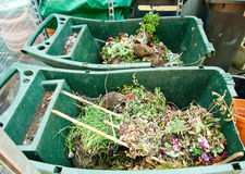 Garden compost bins with dry flowers Stock Photos