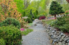 Garden conifers. Trees and nature walkway Royalty Free Stock Photography
