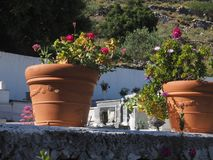Garden containers near house, pots of plants are on the street, on the stairs stock images