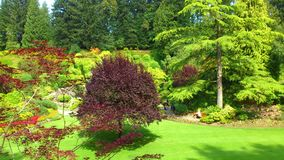 Garden contrasts. Beautifull garden contrasts in paradise Royalty Free Stock Photo