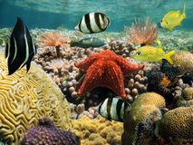 Garden of coral. Just beneath the water's surface with tube worms, starfish and colorful fish stock images