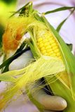 Garden Corn Stock Images