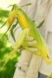 Garden Corn Stock Image
