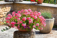 Garden corner with beautiful pink flowers pot Royalty Free Stock Photography