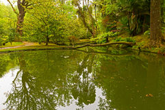 Garden corner with plants reflection in the water. Royalty Free Stock Images