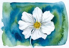 Garden Cosmos. Watercolor painting on blue-green Background on artist paper, created and painted on well sructrured artist paper royalty free illustration
