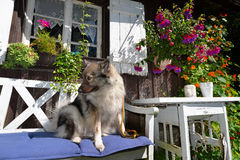 Garden cottage Dog Royalty Free Stock Photography