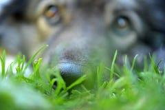 Garden cottage Dog Stock Image