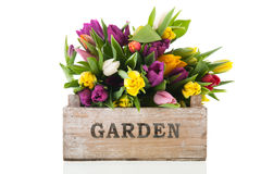 Garden crate full tulips Stock Photo