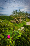 Garden at Crescent Bay Point Park, in Laguna Beach, California. Stock Image