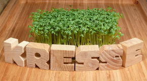 Garden cress Royalty Free Stock Photography
