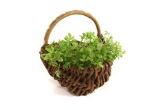 Garden cress in a basket Stock Photos