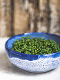 Garden Cress in blue bowl Royalty Free Stock Image