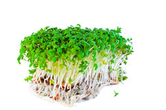 Garden cress isolated on white Royalty Free Stock Image