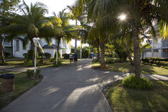Garden in cuba. With palm trees over big houses Royalty Free Stock Photos