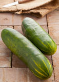 Garden cucumbers Royalty Free Stock Image