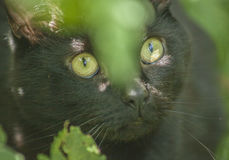 The garden - a cute cat. The picture shows a black cat lit by a bright sunshine. The focus is on the cat`s eyes stock image