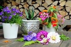 Garden dahlia flower pot Royalty Free Stock Photos
