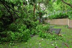Garden damaged by typhoon Stock Photos