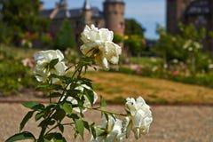 Garden of the De Haar Castle royalty free stock image