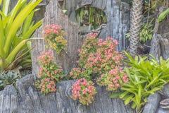 Garden Decorate Royalty Free Stock Photos