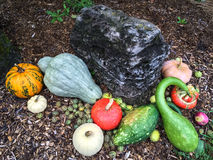 Garden decorated with colorful autumn vegetables Stock Photos