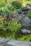 Garden decorated with stones and aquatic plants Stock Images
