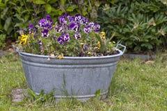 Free Garden Decoration Stock Photography - 25191532
