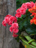Garden Decoration Design. Flower Blossom Royalty Free Stock Images