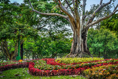 Garden decoration with flowers and big tree Royalty Free Stock Image