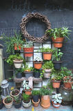 Garden decoration of many plants in pot Stock Image