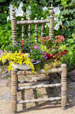 Garden decoration with a old chair. Garden decoration with a old chair and differnt plants makes a unique eyecatcher Stock Images