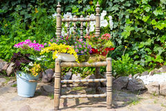 Garden decoration with a old chair. Garden decoration with a old chair and differnt plants makes a unique eyecatcher for rustic garden stye Royalty Free Stock Image