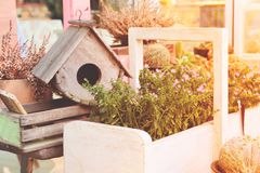 Garden decorations with bird house and small plants. Spring season color Royalty Free Stock Photography