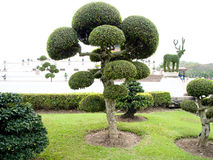 A garden. A decorative garden consists of small shrubs and ebony Royalty Free Stock Image