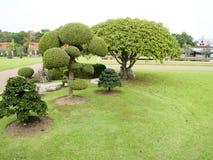 A garden. A decorative garden of small shrubs ,ebony and bo tree Royalty Free Stock Image