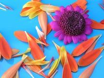 Garden delights Stock Image